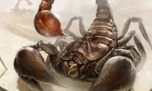 Воспитание ребенка Скорпиона