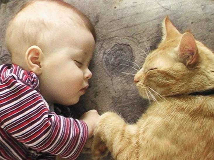 кошки и дети2