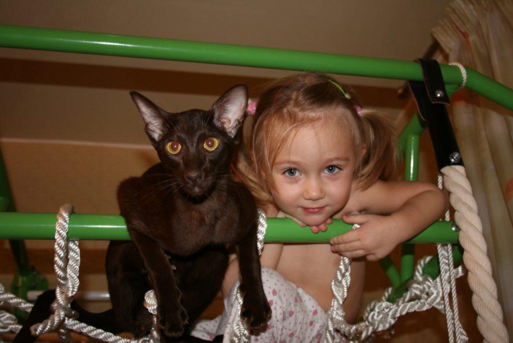 кошки и дети3