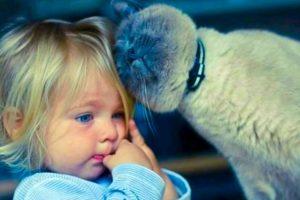 кошки и дети 8