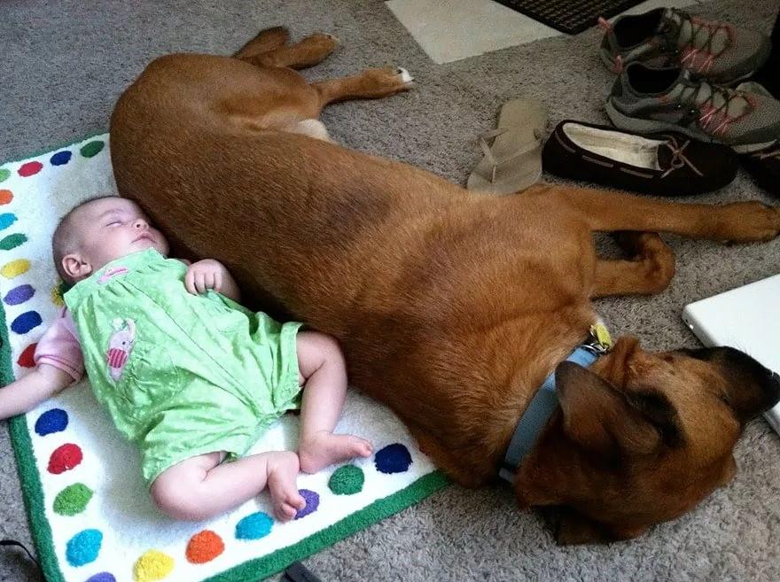 собака и ребенок 5