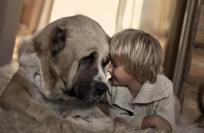 собака и ребенок 10