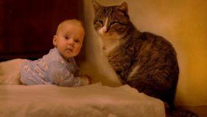 кошки и дети 10