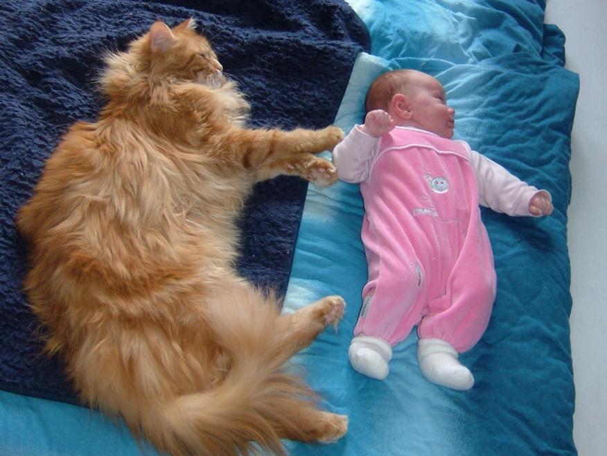 кошки и дети 6