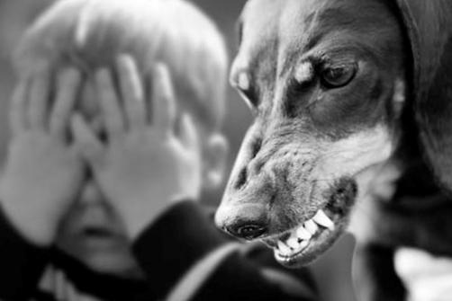 укусила собака 1
